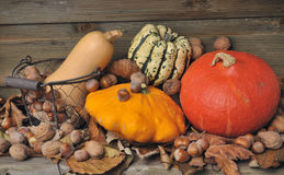 Autumnal pumpkins and dried fruits Stock Photos