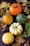 Autumnal pumpkins, harvest Royalty Free Stock Images