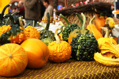 Autumnal pumpkins, harvest Royalty Free Stock Image