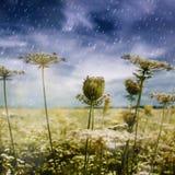 Autumnal rain. Stock Images