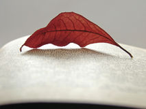 Autumnal reading 1. Autumnal leaf on the page of opened book Royalty Free Stock Photos
