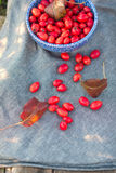 Autumnal red berrys hips Stock Images