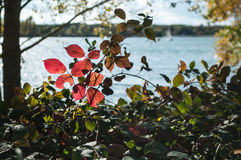 Autumnal red leaves in border  lake Stock Image