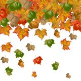 Autumnal, Red leaves of mable Royalty Free Stock Photos