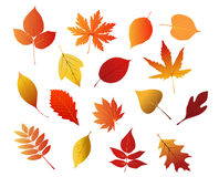 Autumnal red, yellow and brown leaves Stock Photography