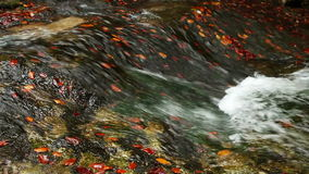 Autumnal red,yellow and orange color leaves in cold mountain river stock footage