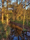 Autumnal riparian forest in the evening light Stock Photography