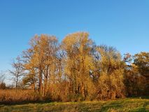 Autumnal riparian forest at sunset Stock Photo