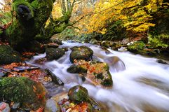 Autumnal riverscape Royalty Free Stock Photos