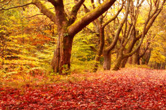 Autumnal Road. In the park, Scotland, Coatbridge Stock Photo