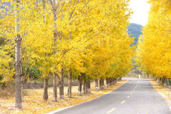 Autumnal road Royalty Free Stock Images