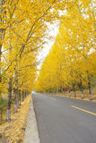 Autumnal road Royalty Free Stock Photo