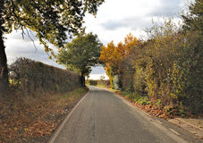 Autumnal road in countryside. Autumn trees near tarmac street Royalty Free Stock Photos