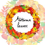 Autumnal round frame. Wreath of autumn leaves. Isolated design elements. Vector illustration. Stock Photography