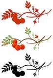 Autumnal rowan twig Stock Image