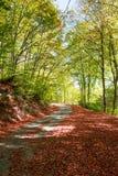 Autumnal rural road Stock Photos