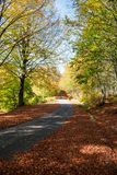 Autumnal rural road Royalty Free Stock Photo