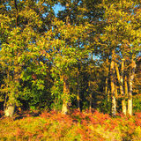 An Autumnal Scene Royalty Free Stock Photos