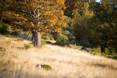 Autumnal scene in the forest. Typical vegetation of an Atlantic continental forest and its adjacent meadows at the beginning of the autumn Royalty Free Stock Photo