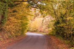 Autumn trees down a country lane in the British countryside. An autumnal scene of some trees and road in the British countryside of Herefordshire, England Royalty Free Stock Image