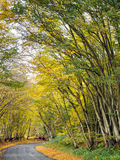 Autumnal Scene Royalty Free Stock Image