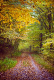 Autumnal scene in the woods Stock Photo
