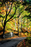 Autumnal scenery Royalty Free Stock Image