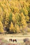 Autumnal scenery Royalty Free Stock Photo
