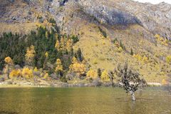 Autumnal scenery Stock Photography