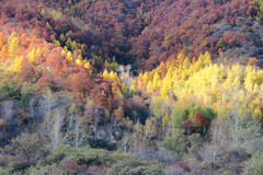 Autumnal scenery Stock Images