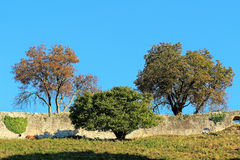 Autumnal scenery idyll at old castle wall. Remnants of a medieval castle wall with goats feeding and trees changing the colors of its leaves at fall Royalty Free Stock Images