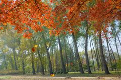 Autumnal park. The autumnal scenery of Jinci Park in Taiyuan, Shanxi, China stock photos