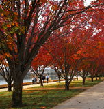 Autumnal Scenery of Lake Burley Griffin Stock Image