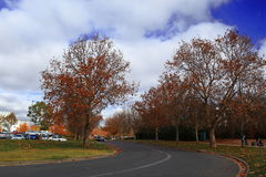 Autumnal Scenery of Lake Burley Griffin shore Stock Photo