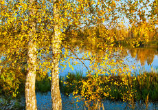 Autumnal scenery royalty free stock photos