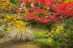 Autumnal scenery of Nikko national park Stock Images
