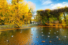 Autumnal scenery in the park Stock Images