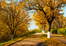 Autumnal scenery in park. Autumnal nature, scenery in central park, Kostroma city Stock Photos