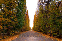 Autumnal scenery in Polish park Royalty Free Stock Photography