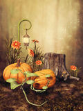 Autumnal scenery with pumpkins Royalty Free Stock Images