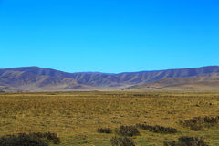 The Autumnal Scenery of Qinghai - Tibet Plateau Royalty Free Stock Image