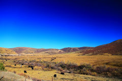 The Autumnal Scenery of Qinghai - Tibet Plateau Royalty Free Stock Photos