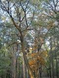 Autumnal scenes royalty free stock photos