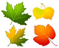 Autumnal Seamless Background With Leaves. Stock Image