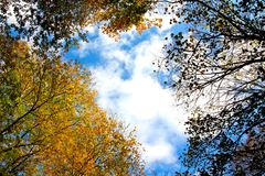 Autumnal sky Royalty Free Stock Image