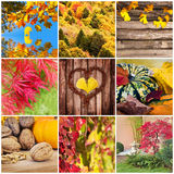 Autumnal square collage Royalty Free Stock Photos