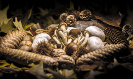 Autumnal still life composition Royalty Free Stock Photography