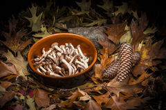 Autumnal still life composition: clay pot and honey mushrooms Royalty Free Stock Images