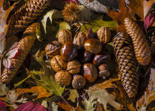 Autumnal still life composition Stock Image