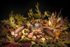Autumnal still life composition Stock Photos